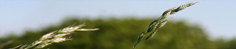 Nature et Paysages de Kerlouan